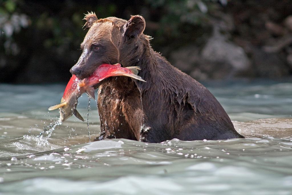 Alaska Animals